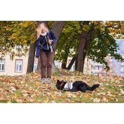 Výcvik psů